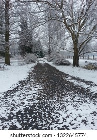 snowy lane with azalias and trees