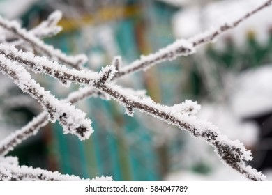 Snowy leafless trees in winter season, natural background.