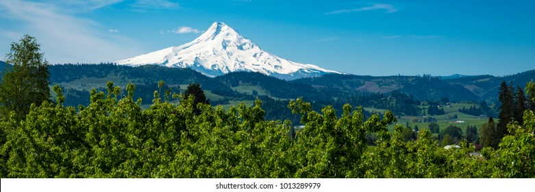 Snowy Mount Hood and apple orchards in the Hood , Oregon River Valley