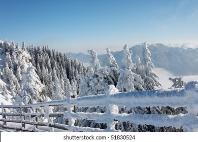 Snowy mountain and trees on sunny winter day in Poiana Brasov, Romania