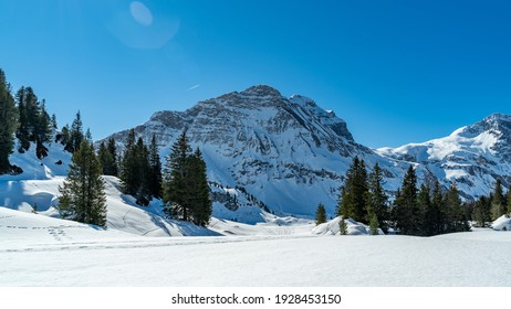 Snowy mountains with fir and spruce tree forests and snowshoe hiking trails and tracks in the foreground. wonderful winter wonderland on a sunny day with blue sky. snow covered peaks in Vorarlberg