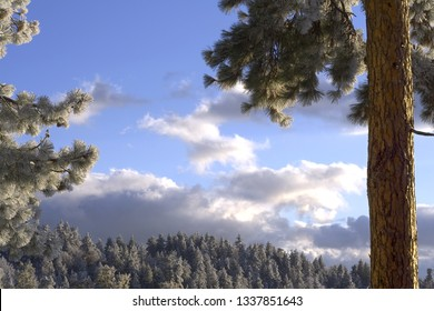 Snowy Mountains In Idyllwild CA