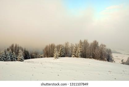 snowy mountains Karpaty in winter morning light. Pylypets, Ukraine