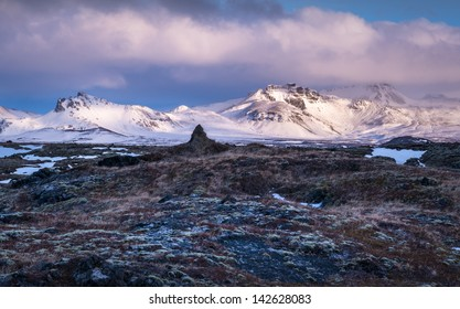 Snowy mountains rise above lichen covered lava rock in Iceland.