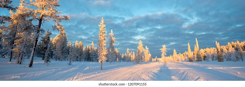 Snowy panoramic landscape, frozen trees in winter in Saariselka, Lapland, Finland