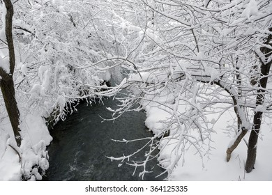 Snowy park scene