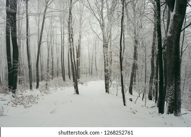 snowy path in cold winter forest with frozen trees