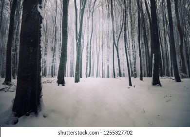 snowy path in forest in winter
