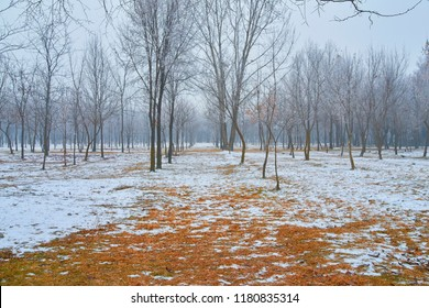 Snowy path leading among the beech trees in early winter forest. Fresh snow on path with trees.
