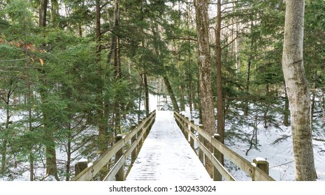 Snowy path through the forest in northern Michigan