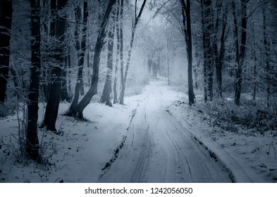snowy path through forest in winter, fantasy landscape