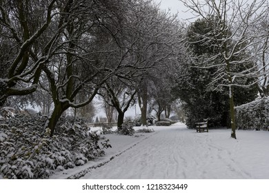 Snowy path and trees, looking cold and bleak.
