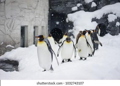 Snowy Penguin Parade