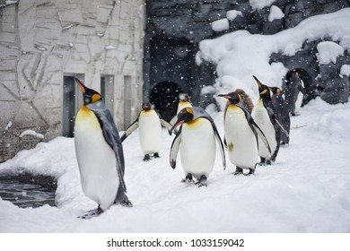 Snowy Penguins Parade Show in the zoo