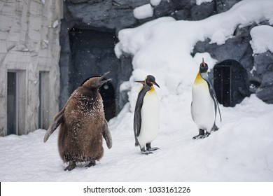 Snowy Penguins Show in the zoo