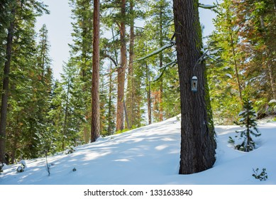 snowy pine forest with birdhouse, birdhouse in the snow, tall pine forest with little birdhouse