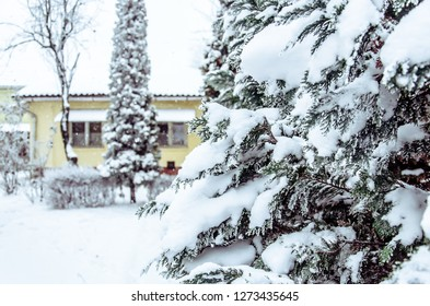 Snowy pine tree and house winter scene, winter fairy tale