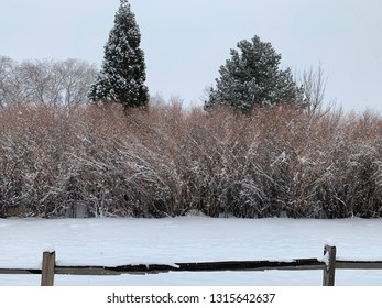 Snowy Rancho San Rafael Park in winter.