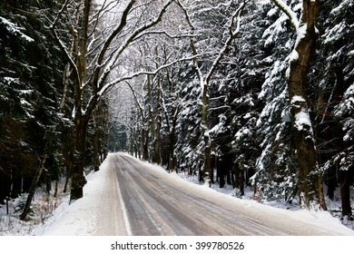 Snowy road in forest