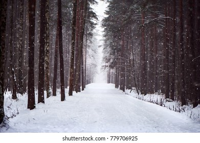 Snowy road in the forest, soft, furry snow falls. The road to love, to the heart. Salvation of forests, ecology, the road home. Winter fairy forest.