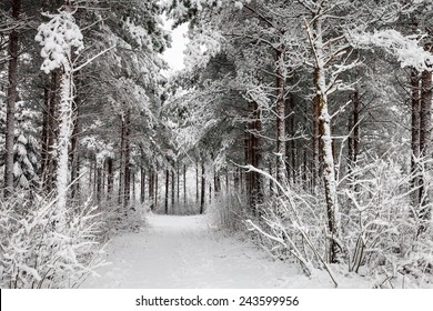 Snowy road going through the forest in the winter in Finland. White snow covering the trees and path leading to the woods.