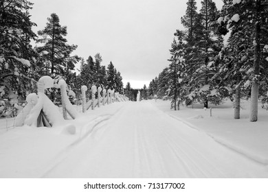 snowy road less traveled flanked by evergreens black and white
