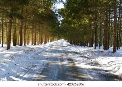 Snowy Road Lined With Trees On Sunny Day