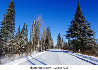 A Snowy road passes through the Sax-Zim Bog. The cold snow clings to the trees while the icy, blue sky stands in stark contrast to the browns and greens of the trees.