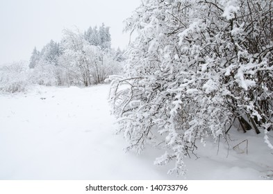 Snowy rural landscape with trees and bush