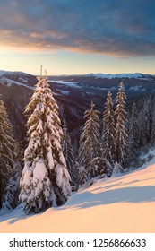 Snowy spruce forest in winter Carpathian Mountains. Pishkonia range, Ukraine