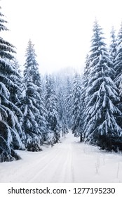 Snowy spruces in the winter forest in the snow. West Tatras, Slovakia.