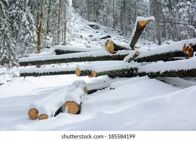 Snowy stack of timber in a forest