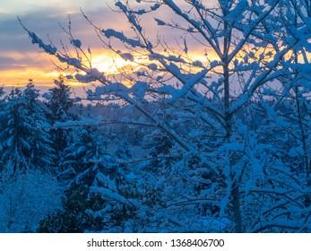 Snowy sunset during snowpocalypse in Bellevue, WA.