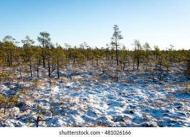 snowy tourist hiking trail in woods in winter. trails in snow
