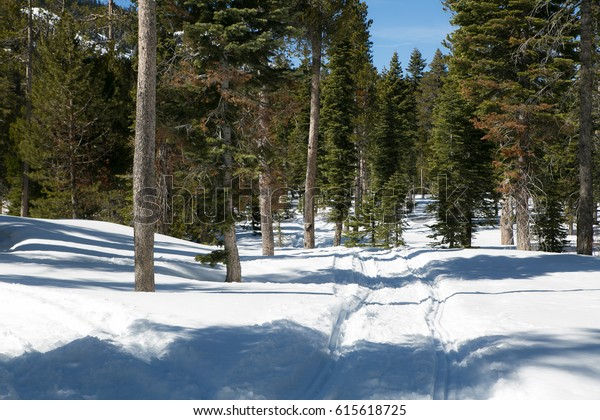 Snowy trail in the deep forest of Lake Tahoe