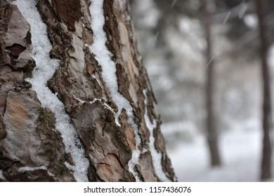 snowy tree, winter