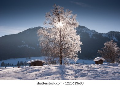 Snowy tree in winter with sunbeams behind the branches, Weissensee, Carinthia, Austria