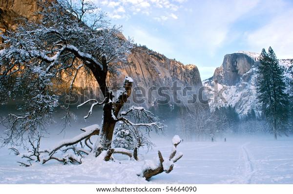 Snowy Tree in Yosemite