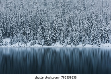 Snowy trees in the Alpine Lakes Wilderness