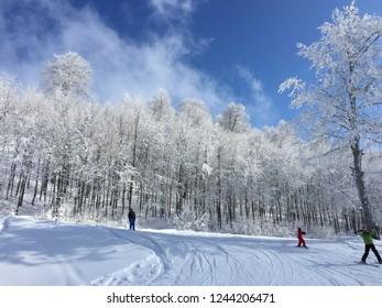 Snowy trees and blue sky on a sunny day on January at Kartepe, Kocaeli, Turkey