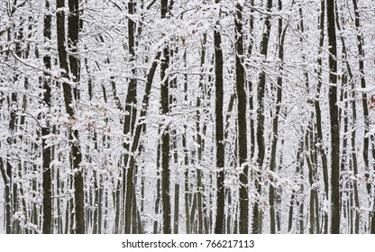 snowy trees, snowy branches, winter forest