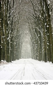 Snowy trees in the forest in the Netherlands