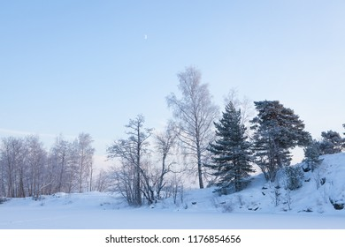 Snowy trees at winter evening