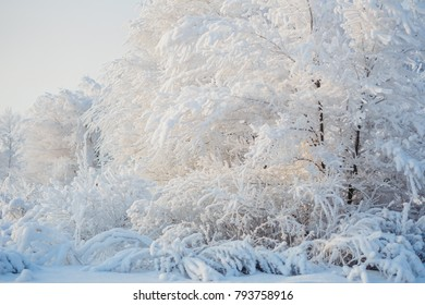 snowy trees, winter forest, snow, winter landscape, snow-covered branches