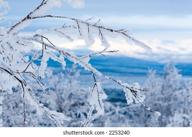 Snowy twigs. Frozen blue mountains and clean sky on background.