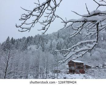 Snowy view in Turkey/ Karadeniz / Ayder Plateau- National Park