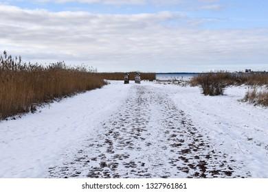 Snowy walkway through a coastal marshland in winter season at the swedish island Oland