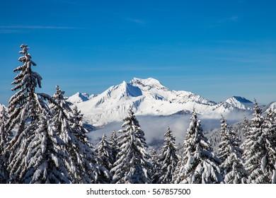 Snowy white mountains range with trees