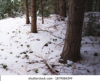A snowy winter day in Massachusetts at the edge of an opening in the forest
