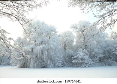 Snowy winter forest fairy